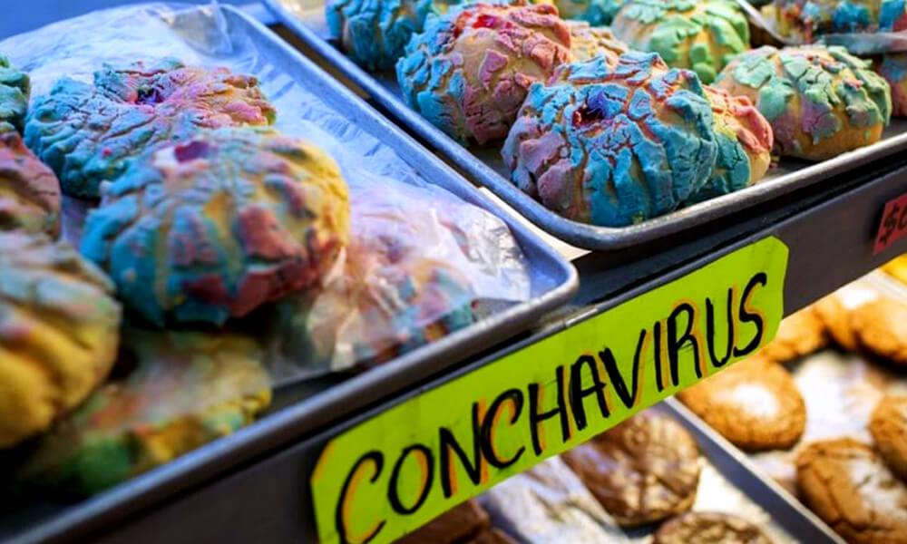 Conchavirus
